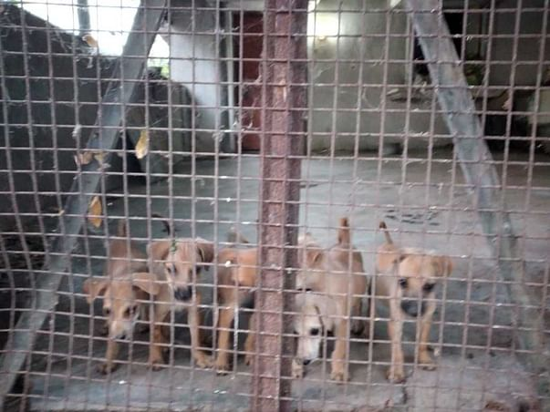 Support Yahshua Animal Trust To Support Shelter Work For Animals