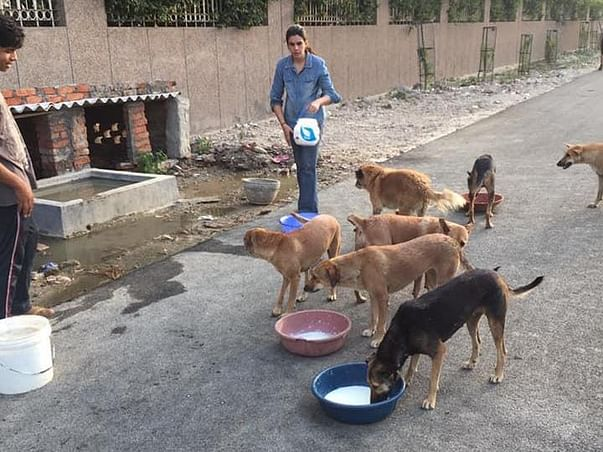 Support Rafat Ahmed In Providing Food To 1000 Stray Dogs In Noida