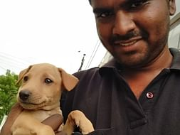 Helping street dog puppies