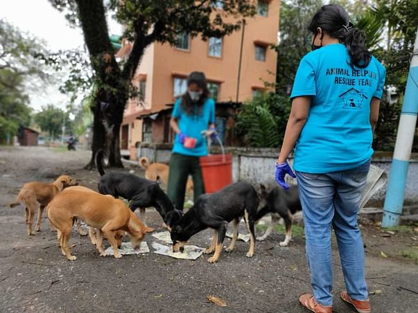 Help us to survive, the singel ngo shelter for animals in city