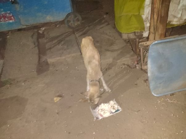 Help stray dogs remain fed during the lockdown