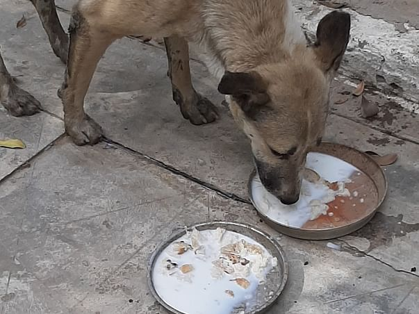 HELP US STERILIZE STRAY DOGS TO REDUCE THEIR SUFFERING