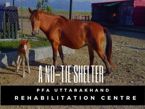 Establishing Animal Rehabilitation Center to help them during lockdown
