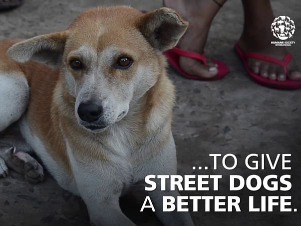 Help Us To Feed Stray Animals During COVID - 19 Pandemic