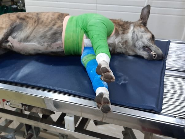 Help RAJA the stray fighting for his justice after miraculous recovery