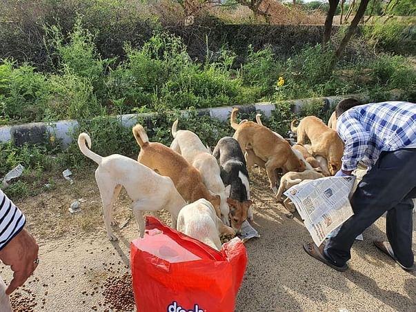 Help Street Animals During Coronavirus Lockdown
