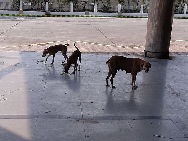 Feeding street dogs and help us to get reflect collars