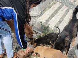 Help us feeding stray dogs in this lockdown