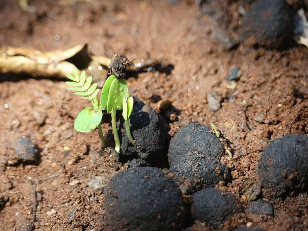 Seedballs India - Help Us to Throw and Grow millions of trees
