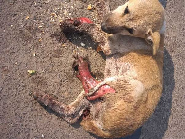 Sterilization of dogs(Prevention is better than cure).