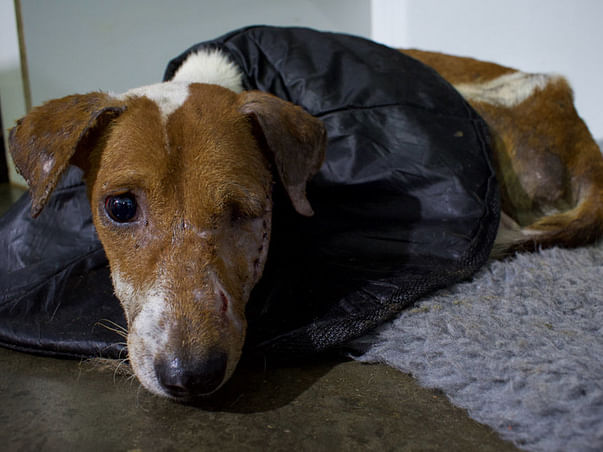 Help me get an Ambulance and XRay Machine for Stray Dogs!