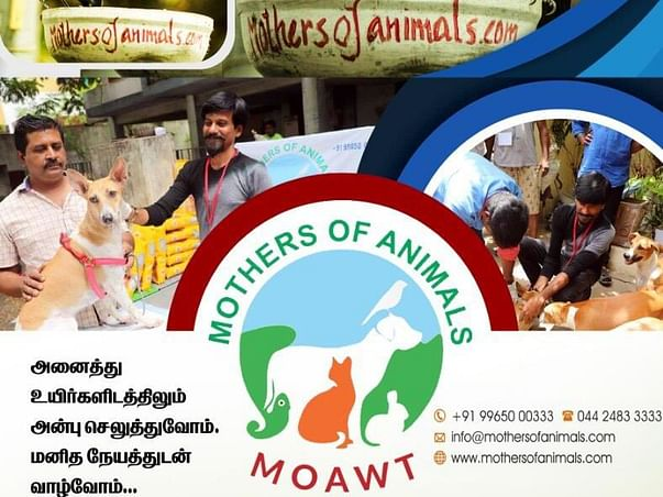 Help Mothers of Animals Help, Feed And Rescue The Poor Stray Animals