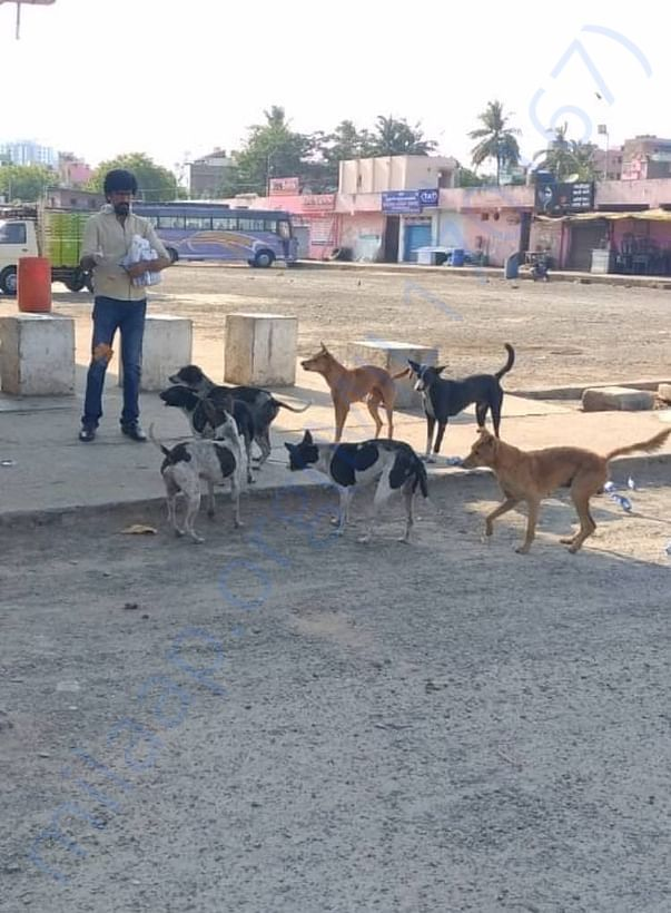 Feeding Dogs in Koyambedu Bus Stand
