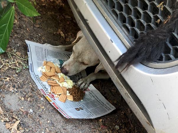 Help sterilise stray dogs
