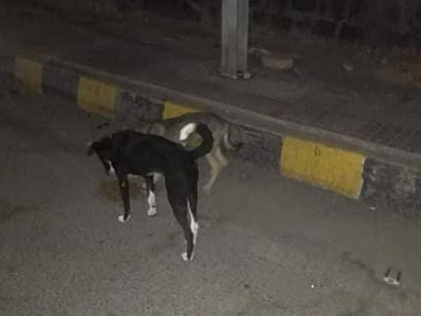 Feed Stray Animals During COVID-19 Lockdown