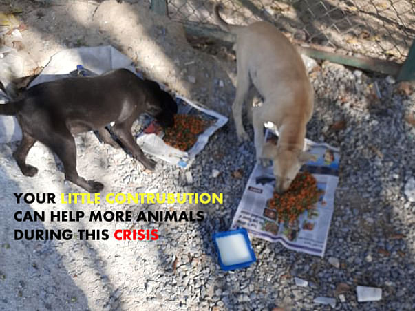 Your Help Can Feed The 100+ Street Animals in Lockdown