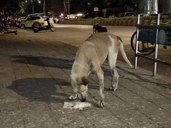 Cause For Paws Mumbai