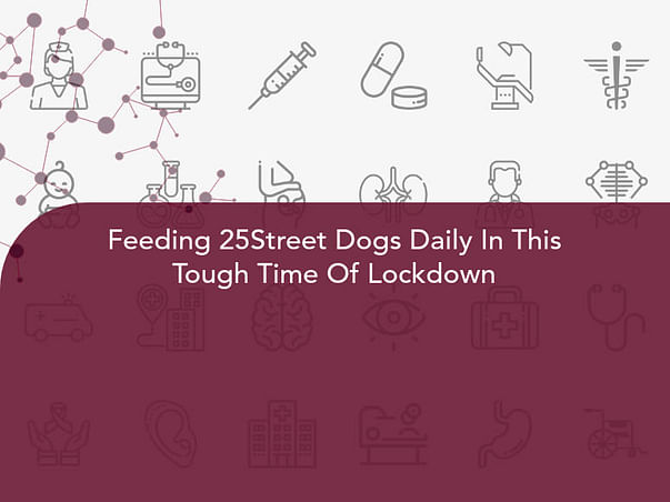Feeding 25Street Dogs Daily In This Tough Time Of Lockdown