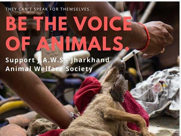 Animal Welfare - For Every Paw Needs a Hand