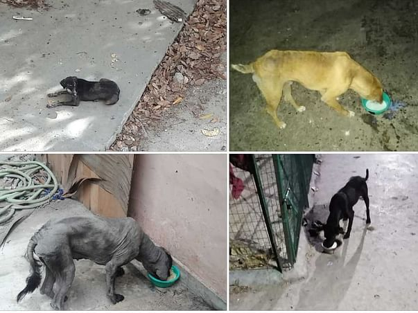 Help Us To Save The Animals From Hunger