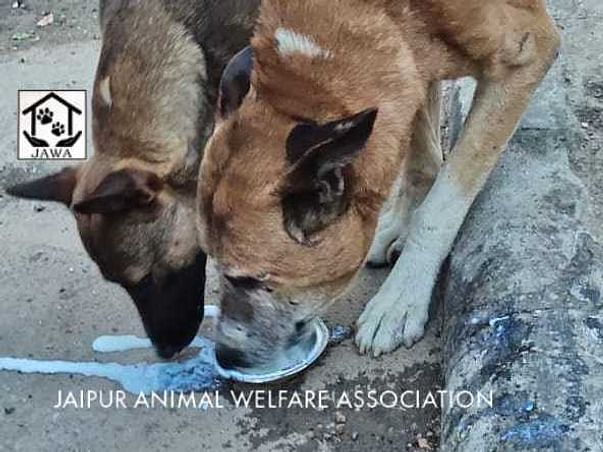 Please help us feed starving animals due to the lock down.