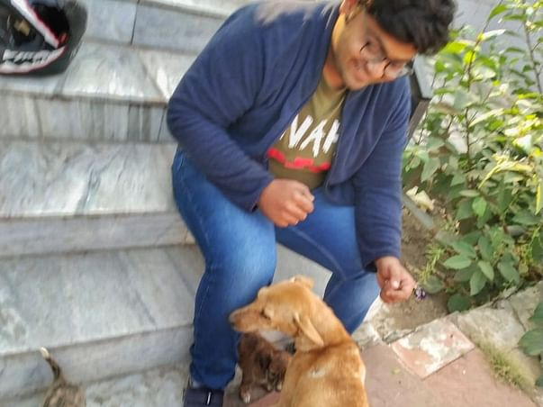 Help and Feed Street Animals