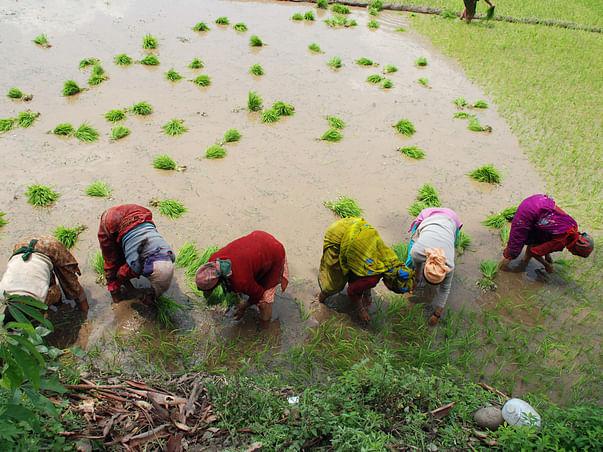 Adopt A Marginalised Farmer In Himalaya - Uttarakhand