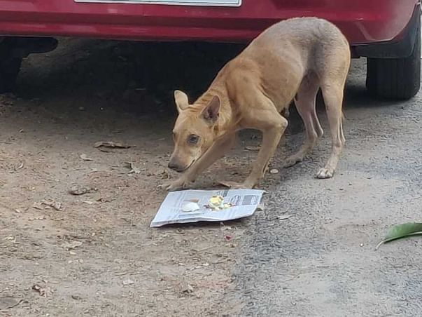 Help us to feed the orphan street animals
