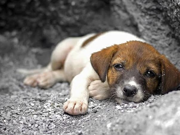 Help the furry friends. Let's be compassionate.