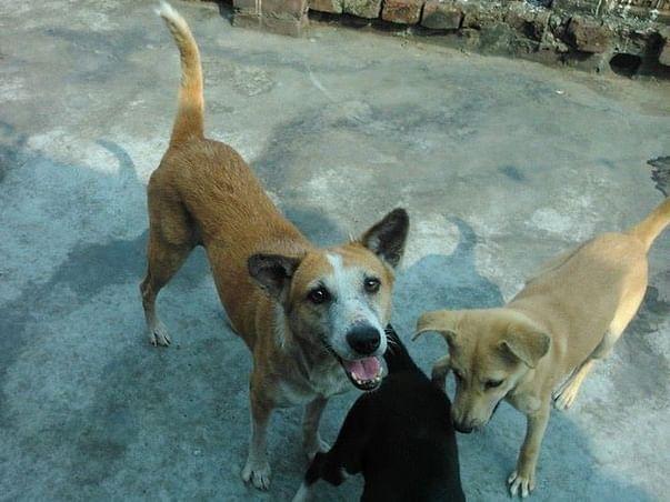 Save Keya's Home for Animals