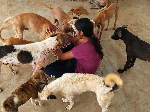Stray & disabled animals are being helped by us everyday in lockdown