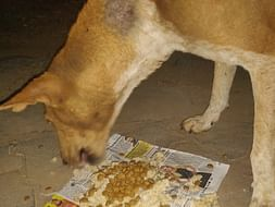 Help Us Feed Stray Animals In Time Of Lockdown