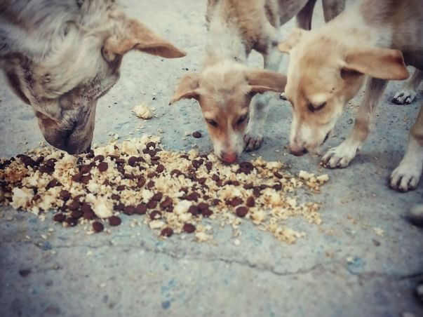 help__for__animals