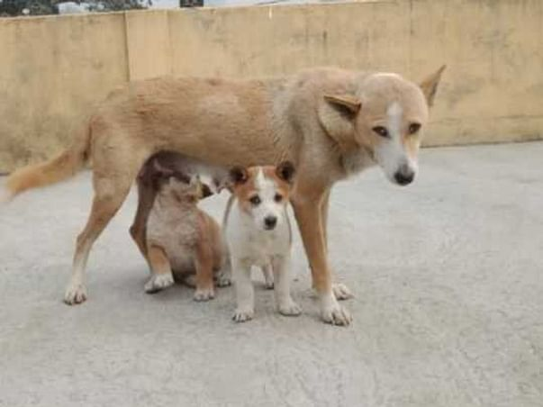 THE VOICE OF STRAY DOGS AND CATS