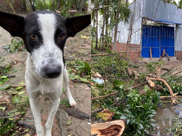 Support Jiva To Save Stray Animals Affected By Amphan