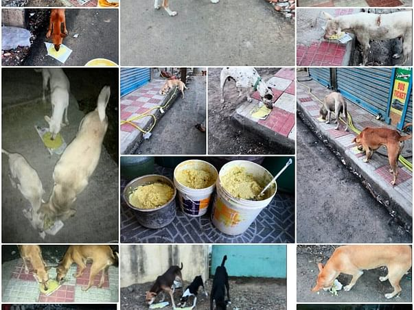Need help for treating stray dogs.