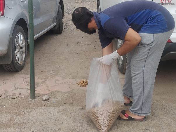 Let's Feed The Stray