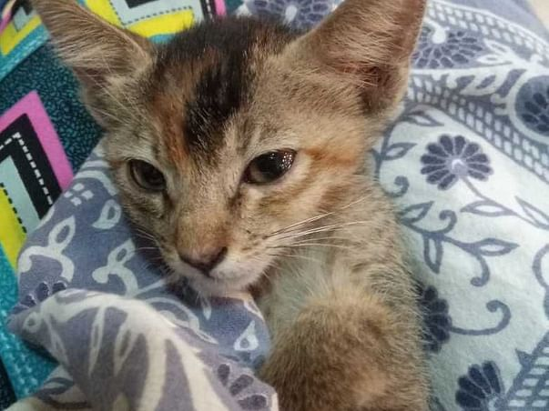 Help paralyzed stray kitten COCO for treatment