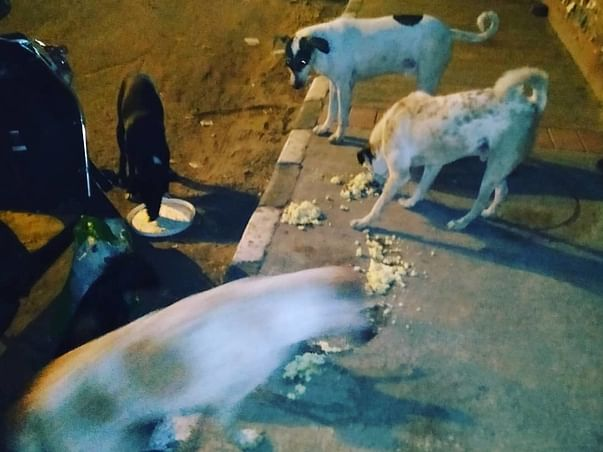 Help me feed Dogs and Cats