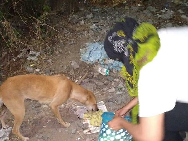 Help us to continue helping the stray dogs