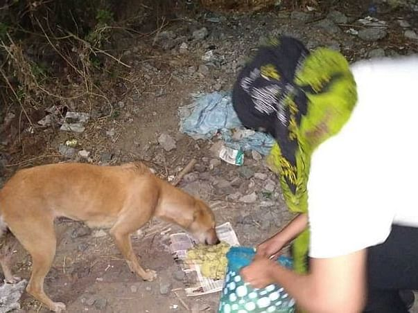 Help This Pets To Take Care