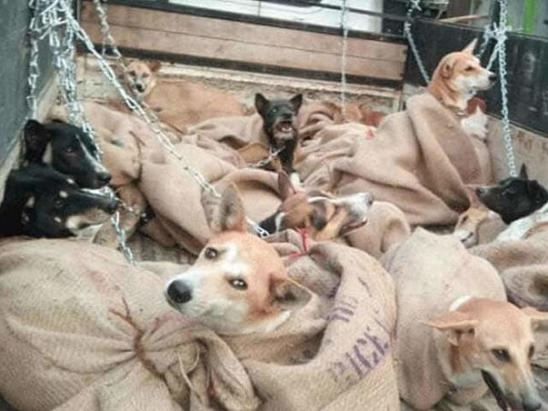 Help Us  Take Care Of 150+ Injured And Abandoned(Dogs) Animals