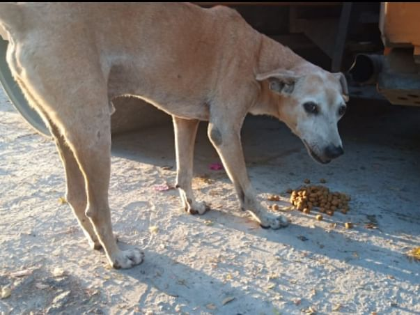 Feed Dogs and Cats in and around Aakriti Eco City, Bhopal