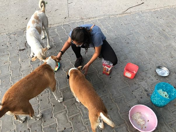 Help Pawni feed and provide anti rabies shot to street animals
