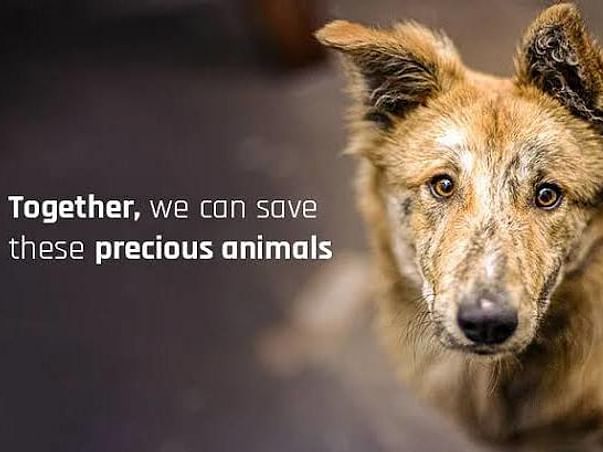 SOS Help Stray Animals - (Chandigarh-Mohali-Panchkula)