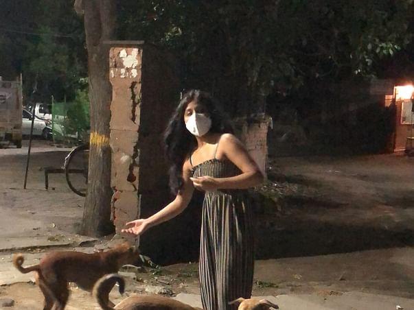 Sniff rescue feed sterilise treat street animals