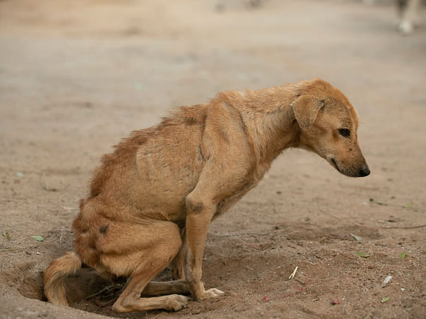 Support The Voiceless And Distressed Animals In A COVID Affected World