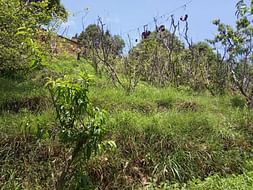 TO PROTECT AREA OF AGRICULTURE LAND AND MAINTAINING THE OLD HOUSE