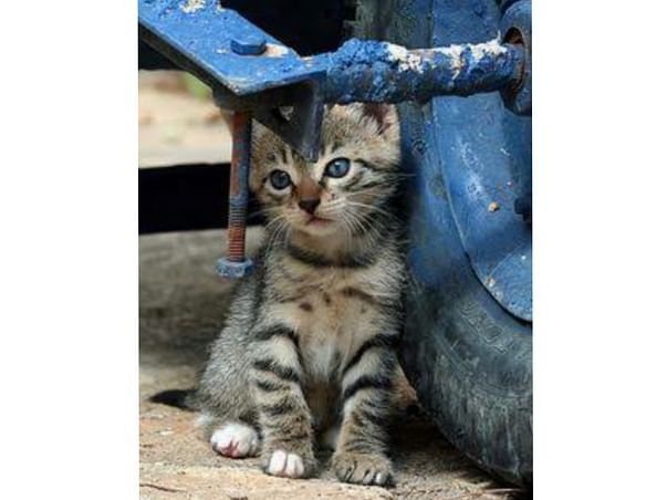 Help the stray kitties!