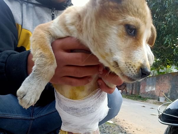 #Help For Make Animals Shelter
